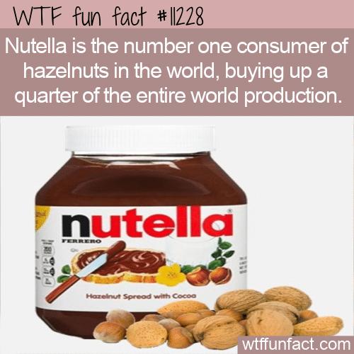 WTF Fun Fact - Primary Hazelnut Consumer