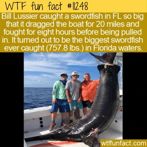 WTF Fun Fact - Record-Breaking Swordfish
