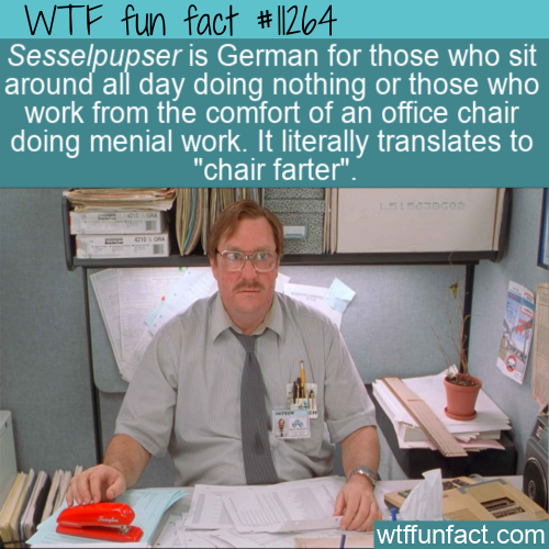 WTF Fun Fact - Sesselpupser
