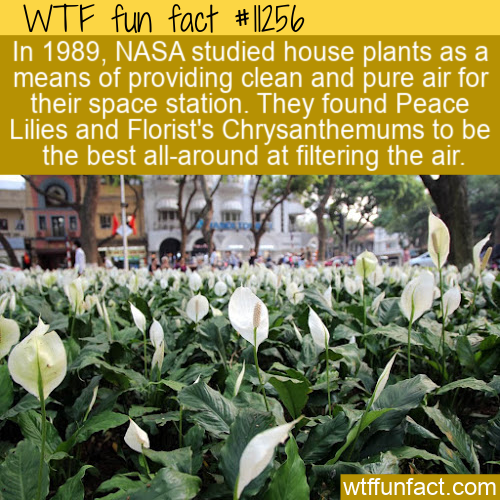 WTF Fun Fact - Space Station Flower Filtration