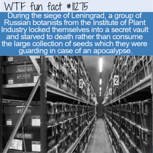 WTF Fun Fact - Starved In A Room Full Of Seeds
