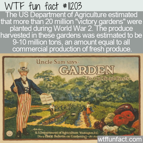 WTF Fun Fact - Victory Gardens Produced