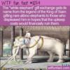 WTF Fun Fact – White Elephant Gift Exchange