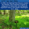 WTF Fun Fact – Witness Tree Protection Program
