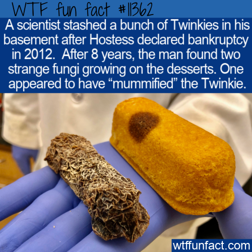 WTF Fun Fact - A Mummified Twinkie