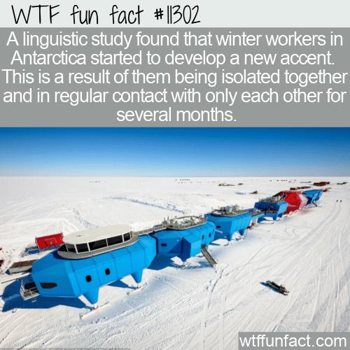 WTF Fun Fact - Antarctic Accent