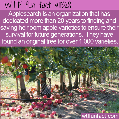 WTF Fun Fact - Applesearch