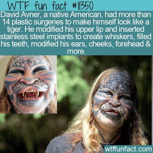 WTF Fun Fact - David Stalking Cat Avner