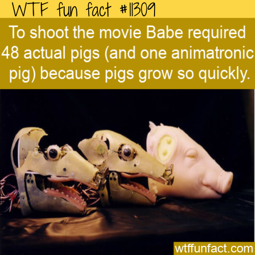 WTF Fun Fact - How Many Pigs In A Movie_