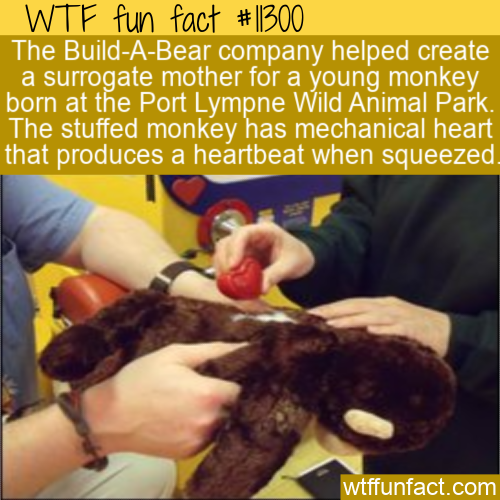 WTF Fun Fact - Stuffed Surrogate Monkey
