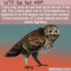 WTF Fun Fact – The Largest Owl