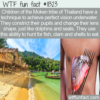 WTF Fun Fact – The Moken's Perfect Underwater Visions