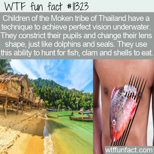 WTF Fun Fact - The Moken's Perfect Underwater Visions