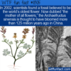 WTF Fun Fact – The Mother Of All Flowers