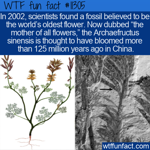 WTF Fun Fact - The Mother Of All Flowers