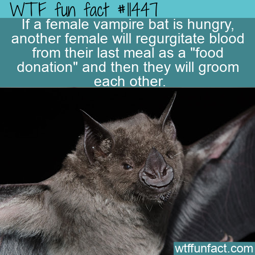 WTF Fun Fact - Bats Regurgitate Food For Each Other