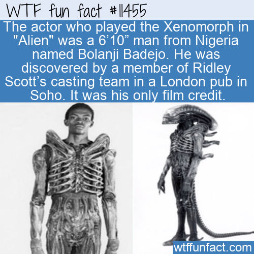 WTF Fun Fact - Bolanji Badejo