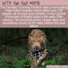 WTF Fun Fact – Devilish Cunning Leopard
