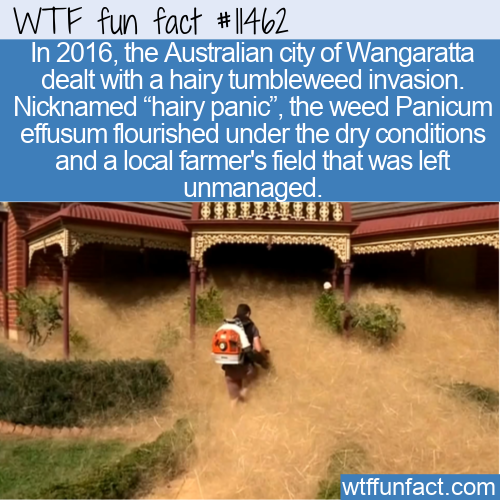 WTF Fun Fact - Hairy Panic In Oz