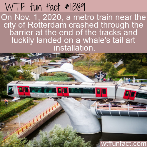 WTF Fun Fact - Lucky Whales Tail