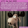 WTF Fun Fact –  Naughty Bullwinkle Puppet