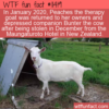 WTF Fun Fact – Peaches And Bunter Reunited