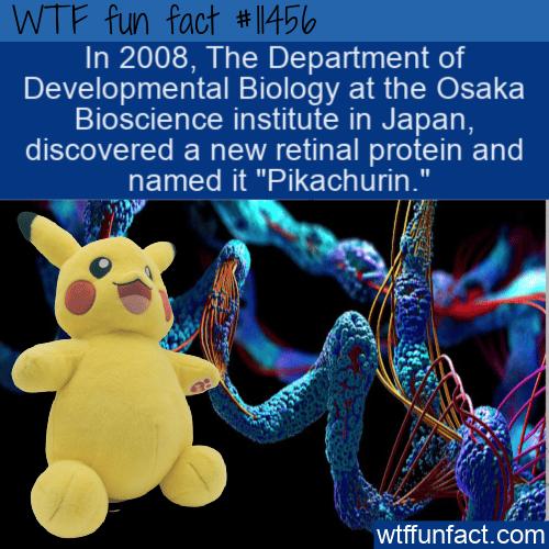 WTF Fun Fact - Pikachurin