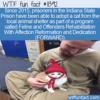 WTF Fun Fact – Prisoners Adopting Cats