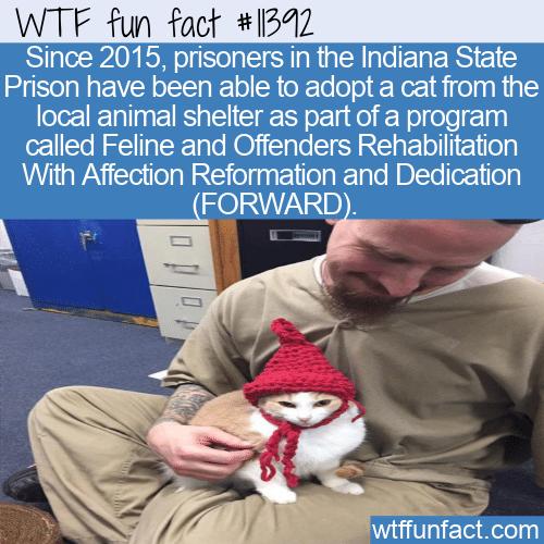 WTF Fun Fact - Prisoners Adopting Cats
