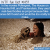 WTF Fun Fact – Real Dead Body Props
