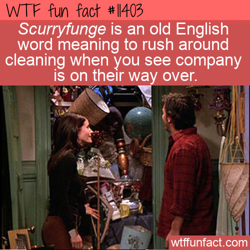 WTF Fun Fact - Scurryfunge