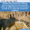 WTF Fun Fact – Sneaky Squirrels