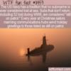WTF Fun Fact – Still On Patrol