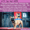 WTF Fun Fact – The Canine Mayor Of Rabbit Hash