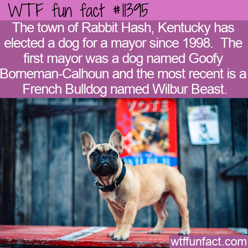 WTF Fun Fact - The Canine Mayor Of Rabbit Hash