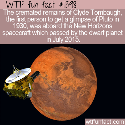 WTF Fun Fact - The Longest Post-Mortem Flight