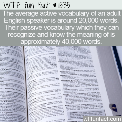 WTF Fun Fact - Active Vocabulary