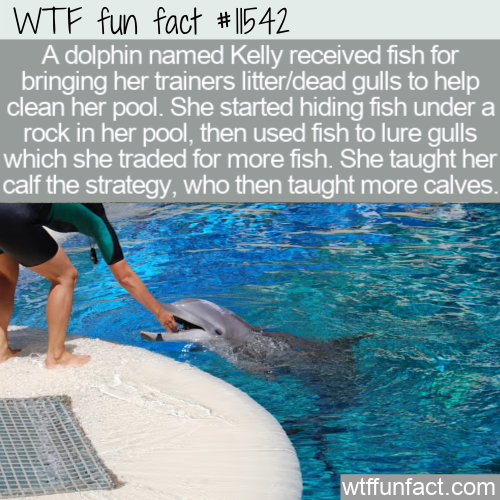 WTF Fun Fact - Kelly The Dolphin