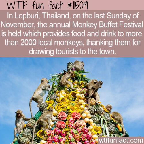 WTF Fun Fact - Monkey Buffet Festival