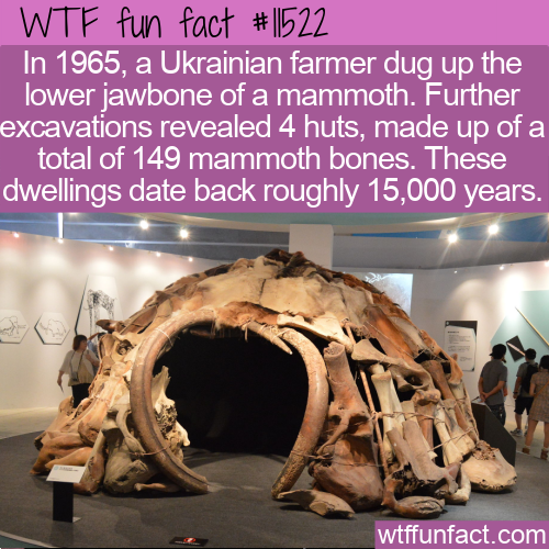 WTF Fun Fact - Old Huts Built From Mammoth Bones