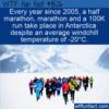 WTF Fun Fact –  The Antarctic Ice Marathon