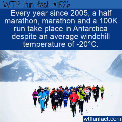 WTF Fun Fact - The Antarctic Ice Marathon