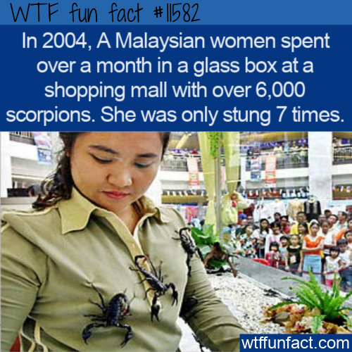 WTF Fun Fact - A Glass Box With 6000 Scorpions