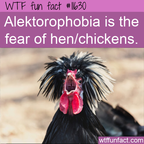 WTF Fun Fact - Alektorophobia