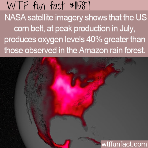 WTF Fun Fact - Corn Belt Vs Amazon