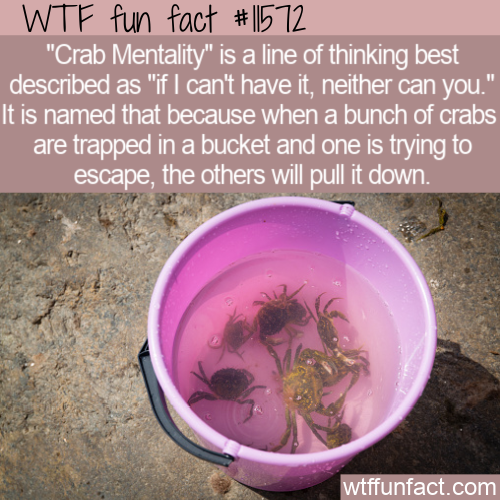 WTF Fun Fact - Crab Mentality