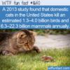 WTF Fun Fact – Domestic Cats As Predators