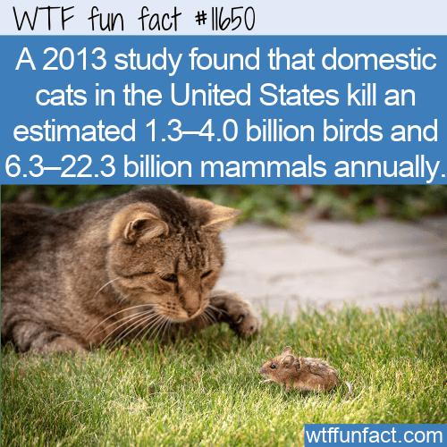 WTF Fun Fact - Domestic Cats As Predators