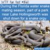 WTF Fun Fact – Florida Water Snake Orgy