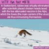 WTF Fun Fact – How Switzerland Rid Themselves of Rabies